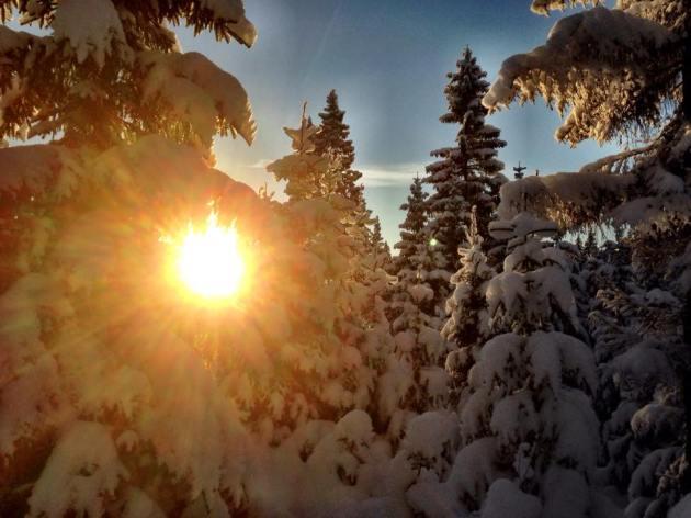 Sol gjennom vintertre