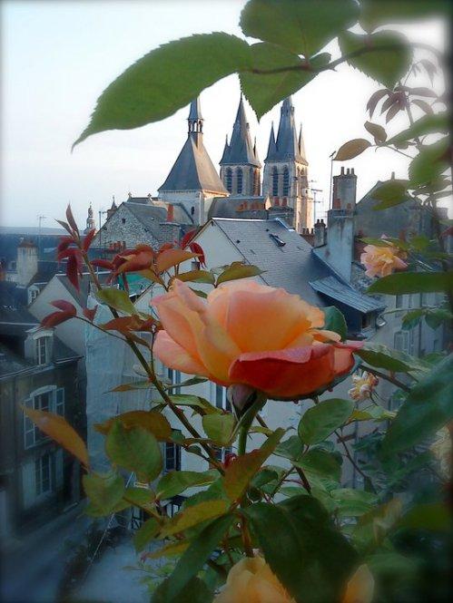 På Druen Frankrike rose