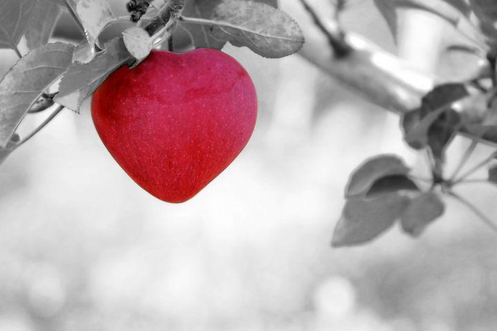 apple-570965__480
