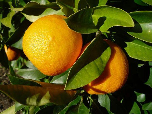 orange-2182477__480