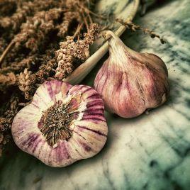 garlic-139659__480