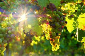 grapes-3550729__480