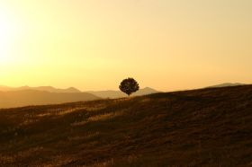 tree-189852__480