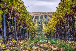 vineyards-3901284__480
